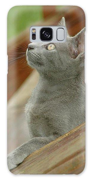 Little Gray Kitty Cat Galaxy Case