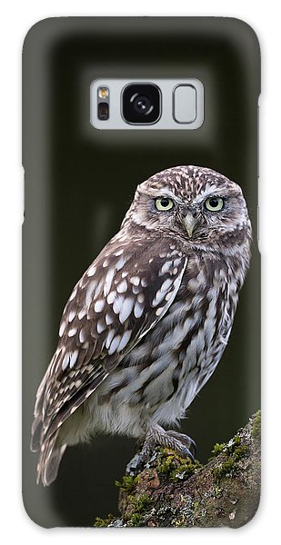 Little Owl Galaxy Case