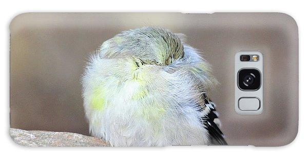 Little Sleeping Goldfinch Galaxy Case