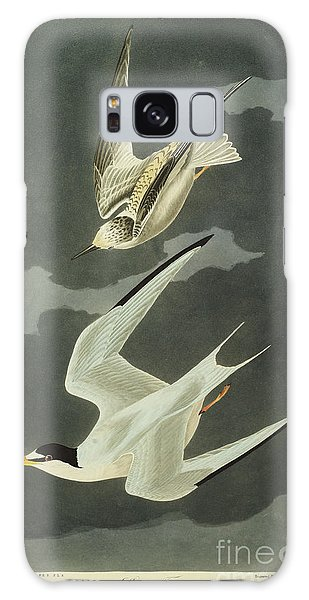 Engraving Galaxy Case - Little Tern by John James Audubon