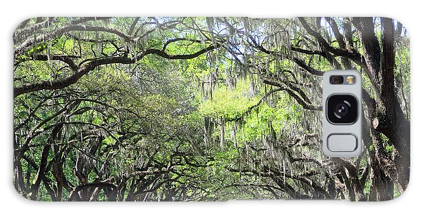 Live Oak Canopy Galaxy Case