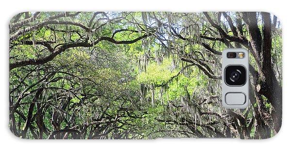 Live Oak Canopy Galaxy Case