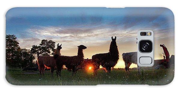 Llamas At Sunset Galaxy Case