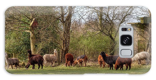 Galaxy Case featuring the photograph Alpacas In Scotland by Jeremy Lavender Photography