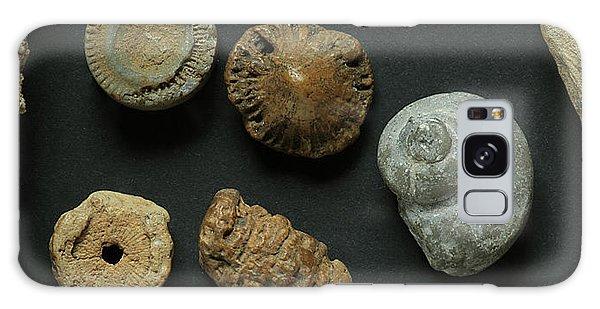 Local Fossils  Galaxy Case