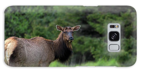 Galaxy Case - Lone Elk At Ecola State Park by David Gn