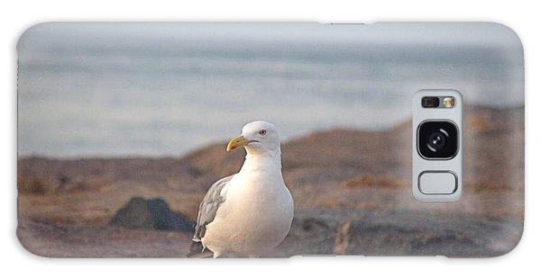 Lone Gull Galaxy Case