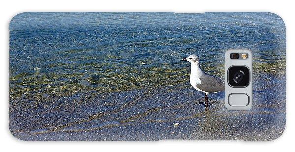 Lone Seagull At Miramar Beach In Naples Galaxy Case