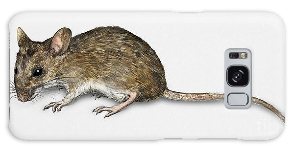 Long Tailed Field Mouse Apodemus Sylvaticus - Wood Mouse - Moulo Galaxy Case