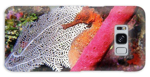Longsnout Seahorse, Roatan, Honduras Galaxy Case