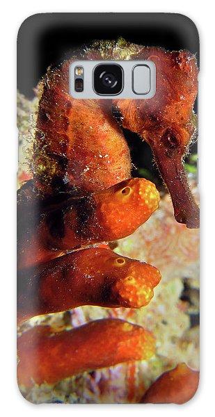 Longsnout Seahorse, St. Croix, U.s. Virgin Islands 2 Galaxy Case