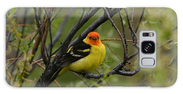 Looking At You - Western Tanager Galaxy Case