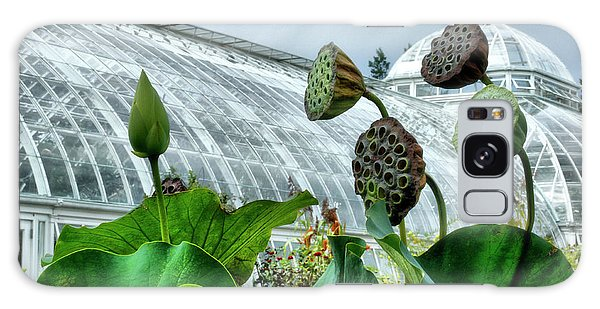 Lotus Seed Pods Galaxy Case