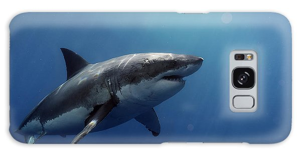 Lucy Posing At Isla Guadalupe Galaxy Case by Shane Linke