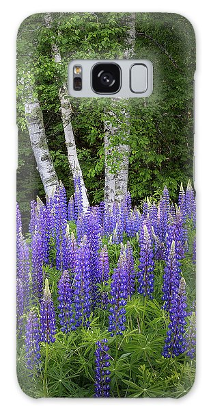 Lupine And Birch Tree Galaxy Case