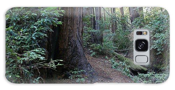 Magical Path Through The Redwoods On Mount Tamalpais Galaxy Case