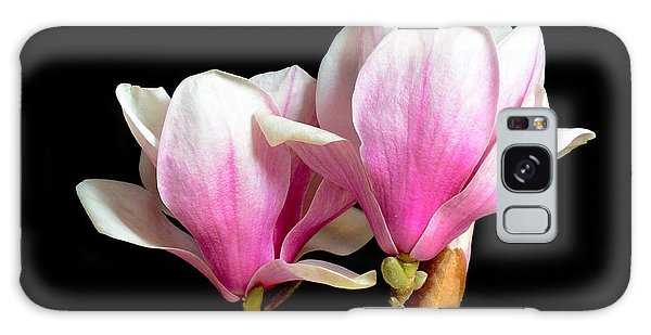 Magnolias In Spring Bloom Galaxy Case by Jeannie Rhode