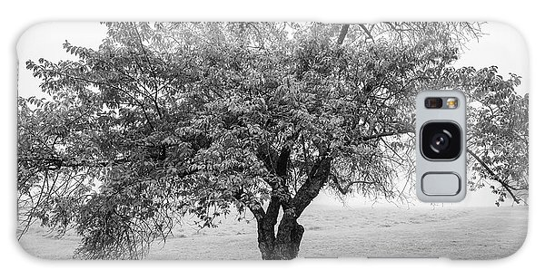Maine Apple Tree In Fog Galaxy Case