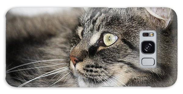 Maine Coon Cat Galaxy Case by Mary-Lee Sanders