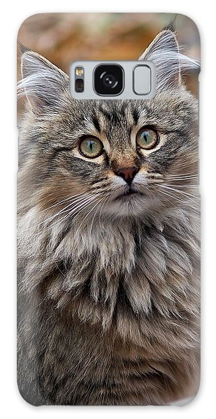 Maine Coon Cat Galaxy Case by Rona Black