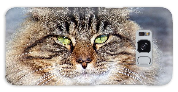 Maine Coon I Galaxy Case