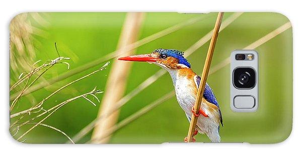 Malachite Kingfisher Galaxy Case