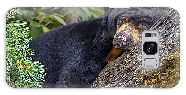 Malayan Sun Bear Galaxy Case