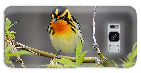 Male Blackburnian Warbler Galaxy Case by Gary Hall