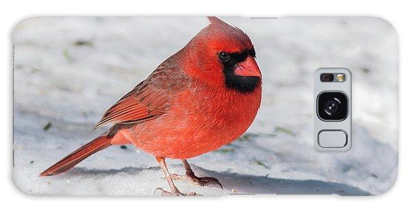 Male Cardinal In Winter Galaxy Case