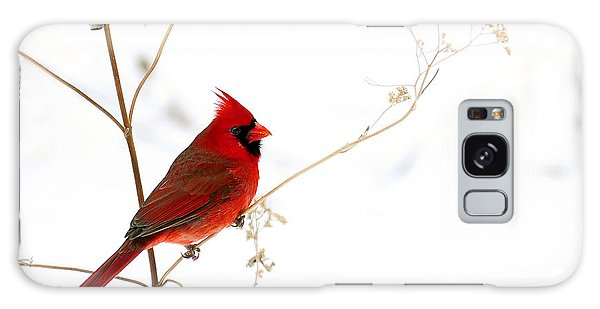 Male Cardinal Posing In The Snow Galaxy Case by Randall Branham