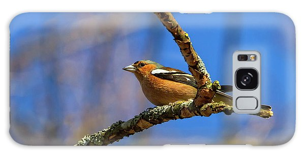 Male Common Chaffinch Bird, Fringilla Coelebs Galaxy Case by Elenarts - Elena Duvernay photo