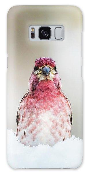 Male House Finch Galaxy Case