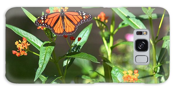Male Monarch Butterflies Galaxy Case