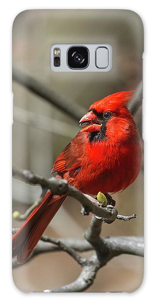 Male Northern Cardinal In Spring Galaxy Case