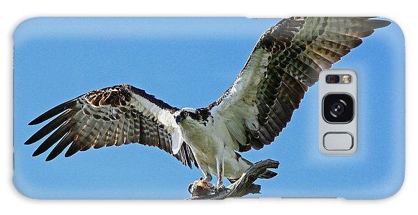 Male Osprey Galaxy Case