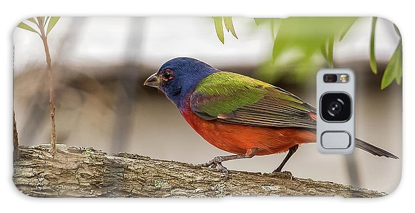 Male Painted Bunting Galaxy Case