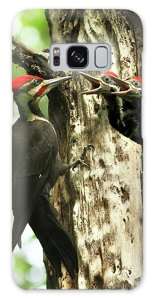Male Pileated Woodpecker At Nest Galaxy Case by Mircea Costina Photography