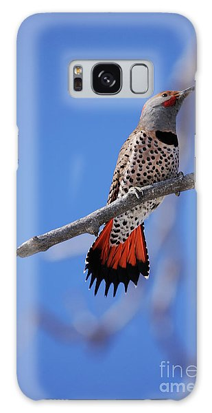 Male Red Shafted Northern Flicker Galaxy Case