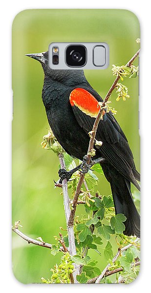 Male Red-winged Blackbird Galaxy Case
