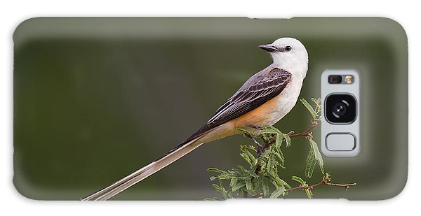 Male Scissor-tail Flycatcher Tyrannus Forficatus Wild Texas Galaxy Case