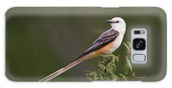 Male Scissor-tail Flycatcher Tyrannus Forficatus Wild Texas Galaxy Case by Dave Welling