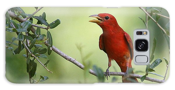 Male Summer Tanager Galaxy Case