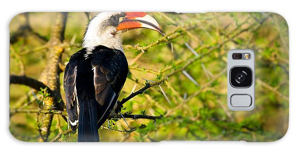 Male Von Der Decken's Hornbill Galaxy Case