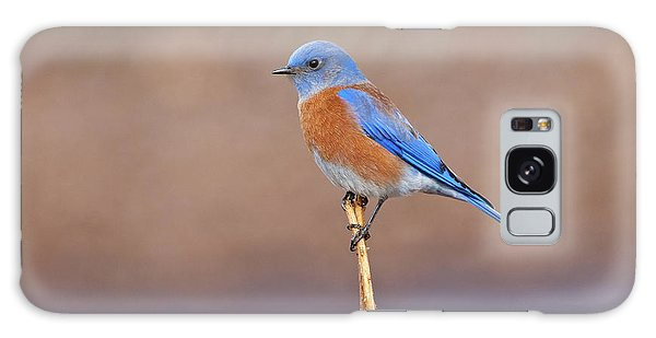 Male Western Bluebird Perched On A Stalk Galaxy Case