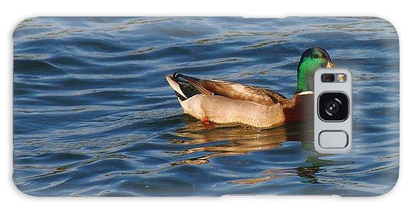 Mallard Drake Duck Swimming Galaxy Case