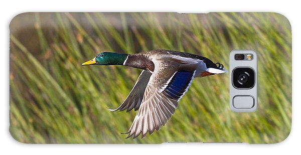 Mallard In Flight Galaxy Case