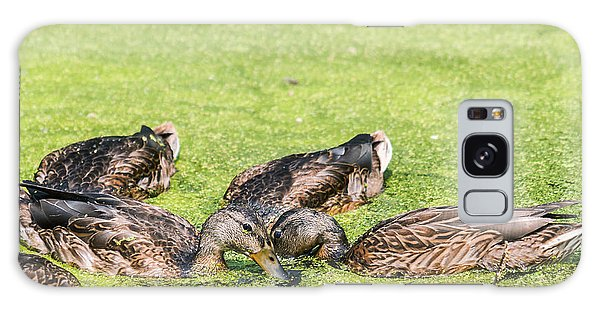 Mallards Coming Up For Air Galaxy Case by Edward Peterson
