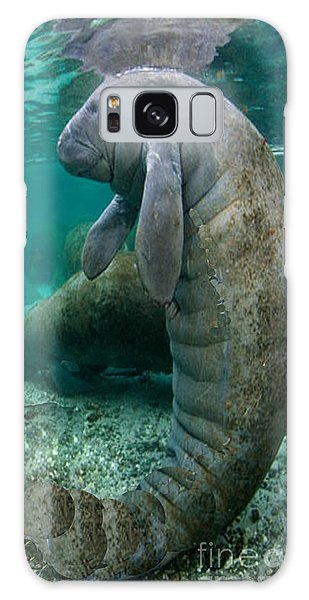 Manatee In Crystal River Florida Galaxy Case