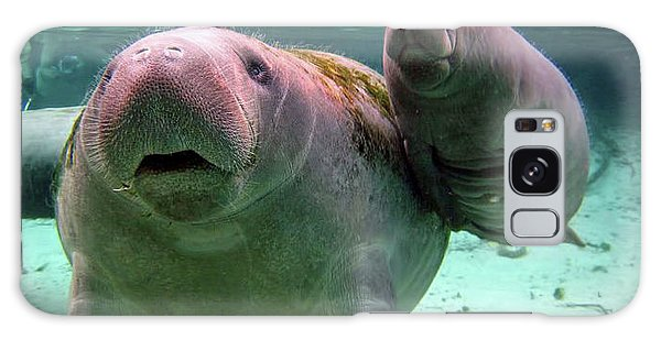 Manatee Mom And Calf Galaxy Case