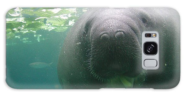 Manatee Raspberry Galaxy Case